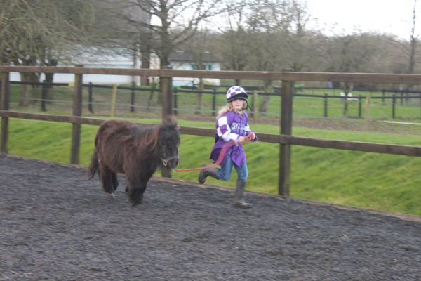 Horse Power Educational Programme